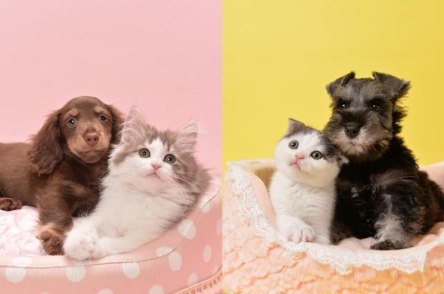 DOG&CAT JOKER 1枚目