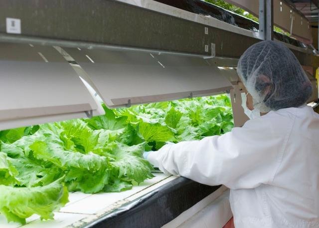 農業という日本の伝統産業に 新しい技術を取り入れ、 オンリーワンのものをつくり出しています。