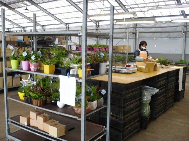 """""""花や植物が好き、興味がある""""そんな方歓迎します! 植物の種類や作業方法はイチから丁寧にお教えします◎"""
