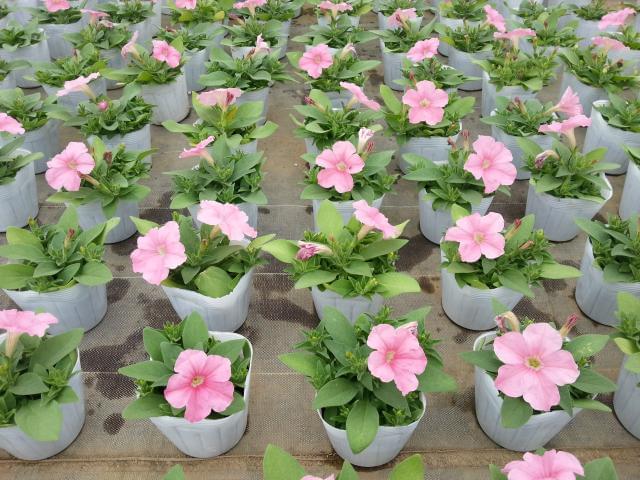 カワイイお花に囲まれながら、Happyな時間を送れますよ♪
