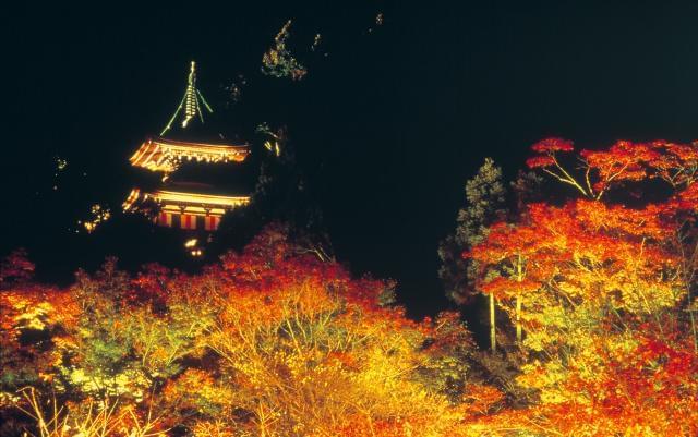 20〜50代が男女共に活躍中!京都有数の観光地で働きませんか?お寺に興味がある方、貴重な時間を体感してください。