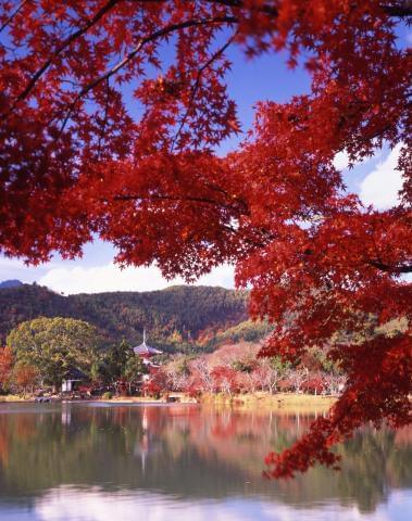 多くの観光客が訪れる「秋の京都」。魅力がいっぱい!